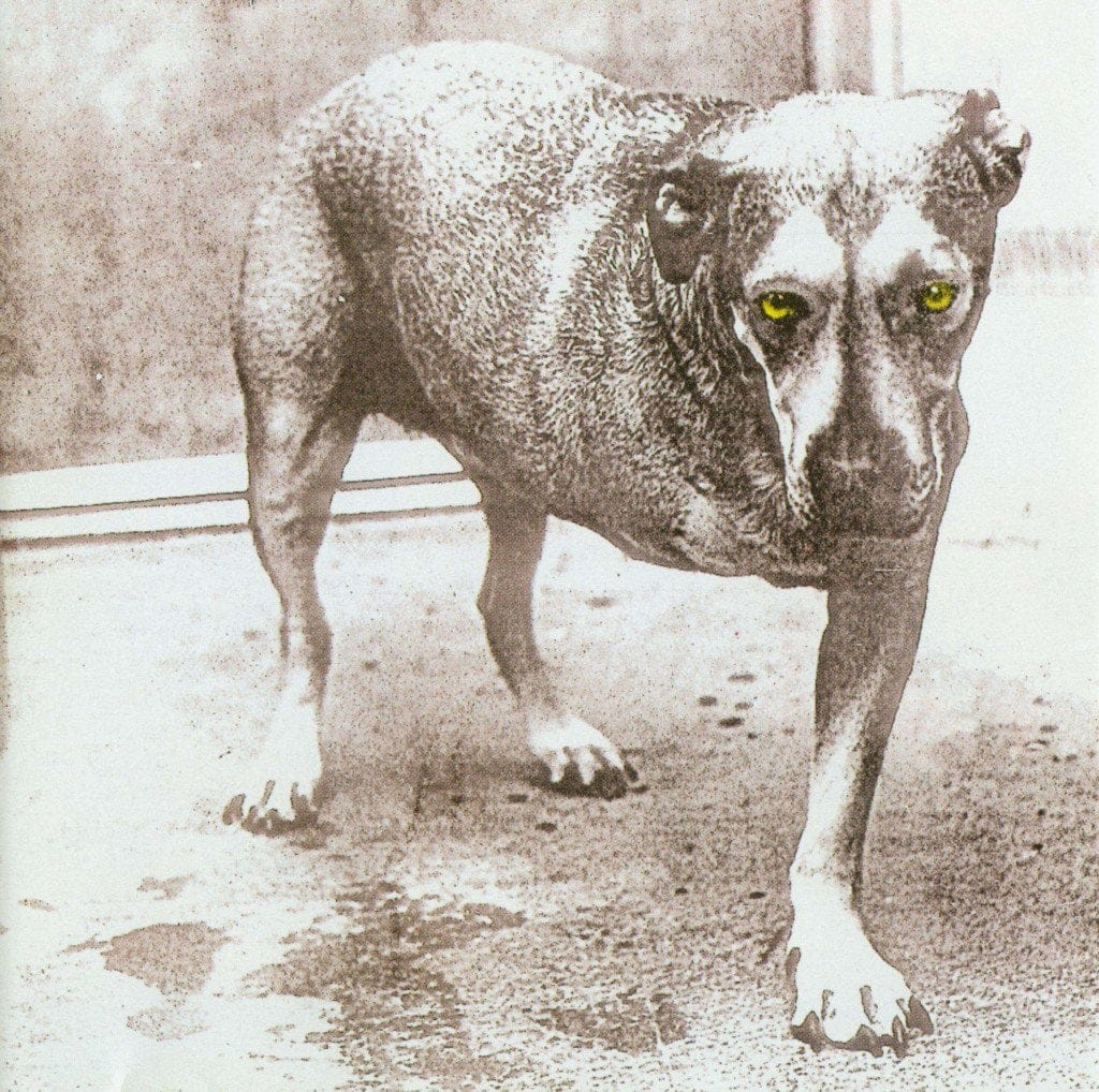 Alice In Chains_Alice In Chains